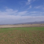 Суви трски на остатоците од Катлановското Блато