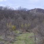 Месноста  на ископините кај Бадар