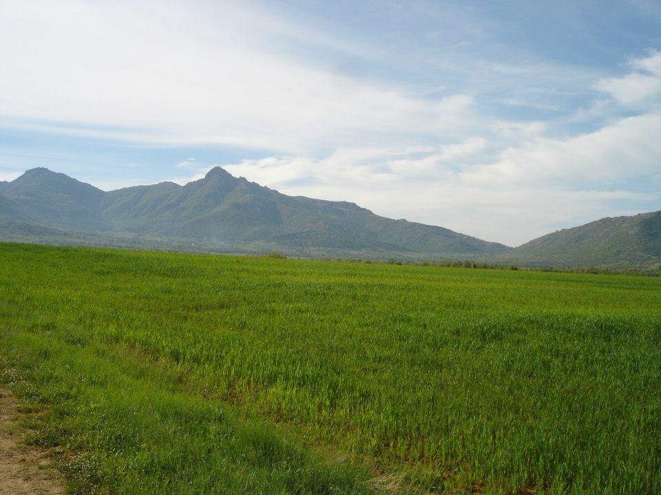 Златоврв од Пелагонија во пролет